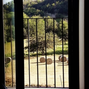 Dorothy Lab Land - Cascina Dragone - L'allevamento (4)