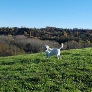 Dorothy Lab Land - Cascina Dragone - L'allevamento (5)