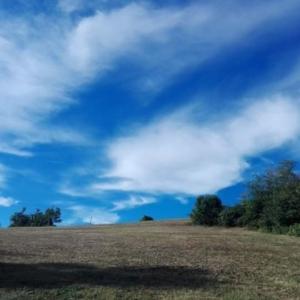 Dorothy Lab Land - Cascina Dragone - L'allevamento (7)